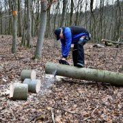couper les arbres de son jardin
