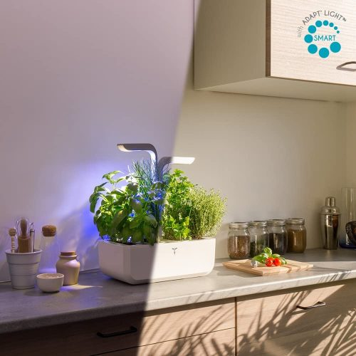 Plantes aromatiques intérieur avec lumière artificielle