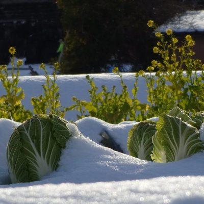 Entretenir son potager en hiver