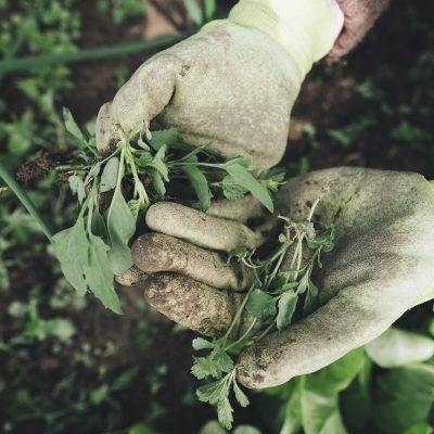 Equipement de protection pour le jardinage